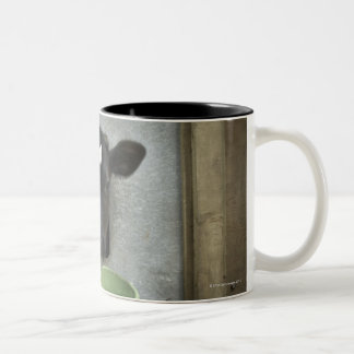Cattle, Individual Pen Two-Tone Coffee Mug