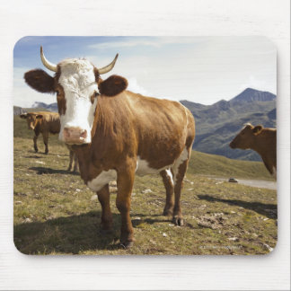 Cattle Mouse Pad
