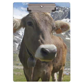 Cattle of the 'Alpine Brown' breed Clipboards
