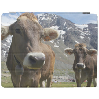 Cattle of the 'Alpine Brown' breed iPad Cover