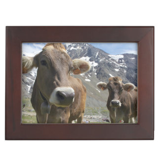 Cattle of the 'Alpine Brown' breed Keepsake Box