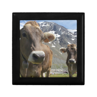 Cattle of the 'Alpine Brown' breed Small Square Gift Box