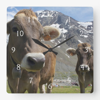 Cattle of the 'Alpine Brown' breed Square Wall Clock