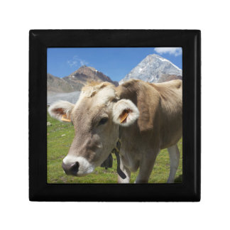 Cattle of the Bruna Alpina Gift Box