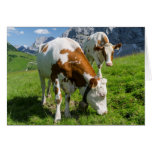 Cattle On High Pasture In Karwendel Mountain 2 Card