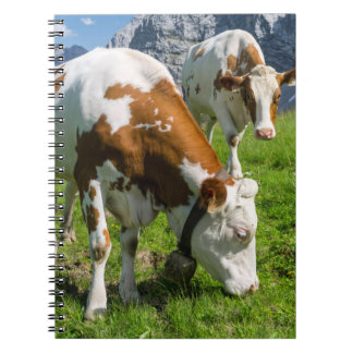 Cattle On High Pasture In Karwendel Mountain 2 Notebook