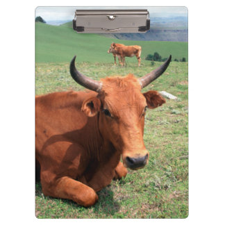 Cattle On Hill, Eastern Cape, South Africa Clipboard