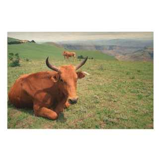 Cattle On Hill, Eastern Cape, South Africa Wood Print