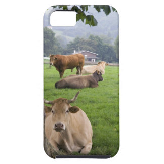 Cattle on rural farmland near the town of iPhone 5 cases