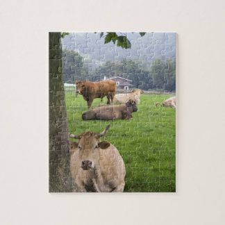 Cattle on rural farmland near the town of jigsaw puzzle