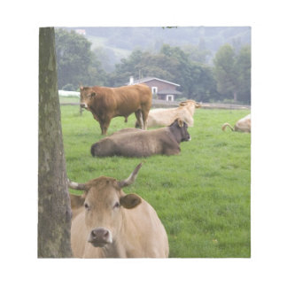 Cattle on rural farmland near the town of notepad