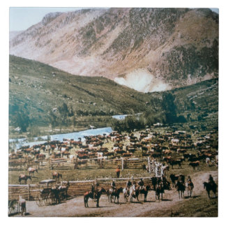 Cattle Ranch, Colorado, 1899 (photo) Large Square Tile