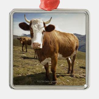 Cattle Silver-Colored Square Decoration