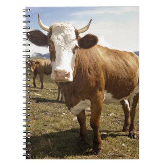 Cattle Spiral Notebook