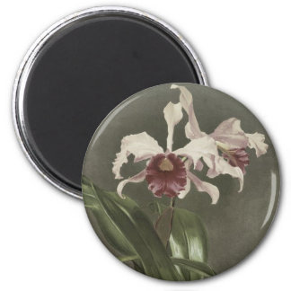 Cattleya Arnoldiana Orchid Magnet