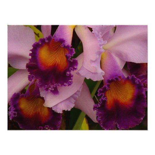 Cattleya Hybrid Orchid Framed Print Photo Print