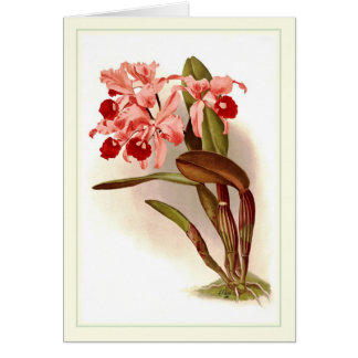 Cattleya lawrenceana cards