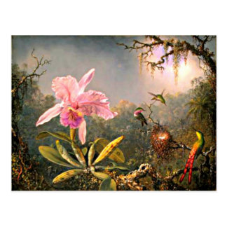 Cattleya Orchid and Three Hummingbirds Postcard