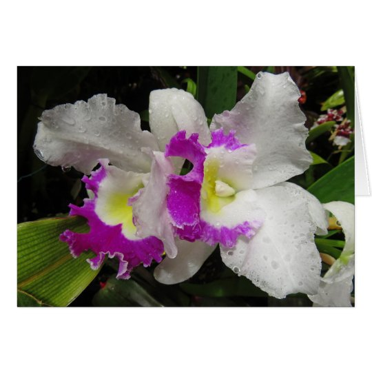 Cattleya Orchid Card