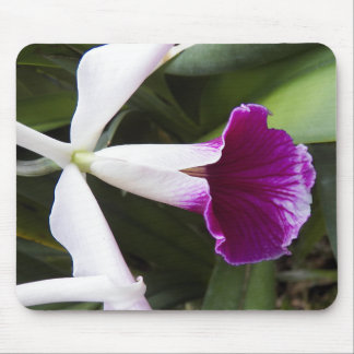 Cattleya Orchid Floral Mouse Mat
