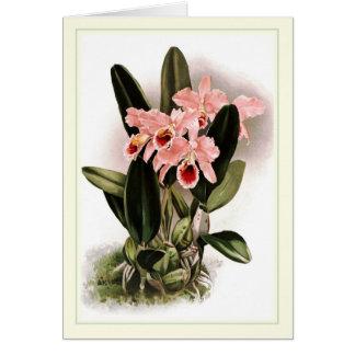 Cattleya percivaliana greeting card