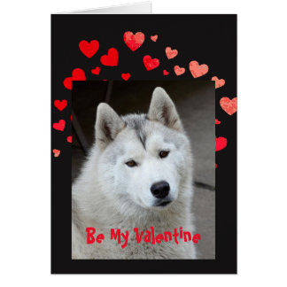 Cause I Woof Love You Husky Dog Valentine Card