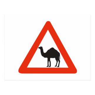 Caution Camels, Traffic Sign, United Arab Emirate Postcard