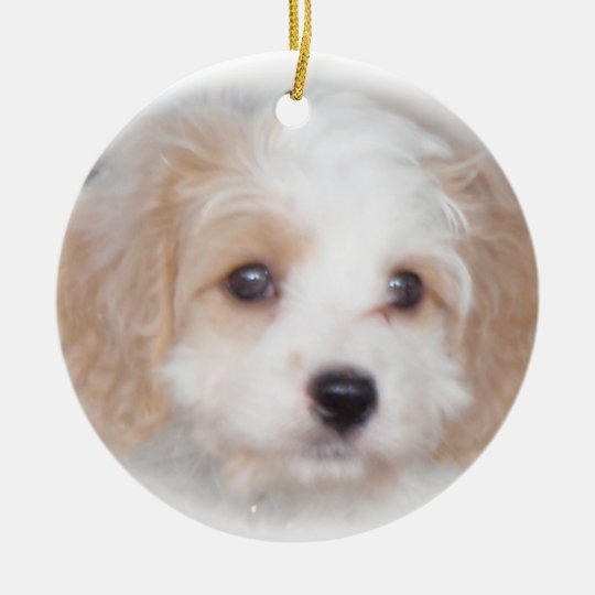 Cavachon Chase Ceramic Ornament