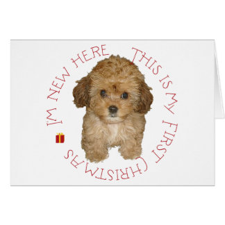 Cavachon Puppy First Christmas Card