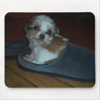 Cavachon puppy in slipper mouse pad