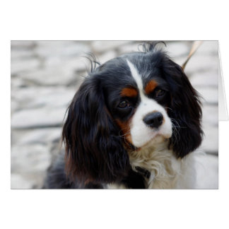 Cavalier Deep in thought Card