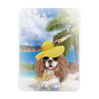 Cavalier King Charles Beach Fun Rectangular Photo Magnet