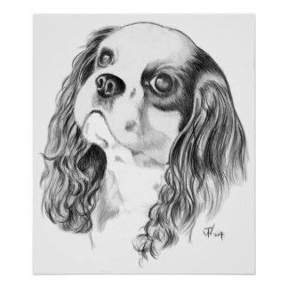 Cavalier King Charles Drawing Poster