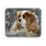 Cavalier King Charles Spaniel 8R16D-01 Postcard