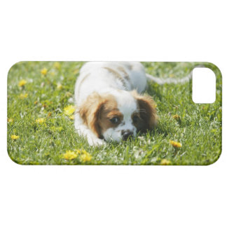 Cavalier King Charles Spaniel Barely There iPhone 5 Case