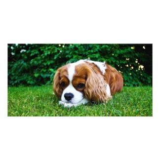 Cavalier King Charles Spaniel Blenheim in Grass Customised Photo Card