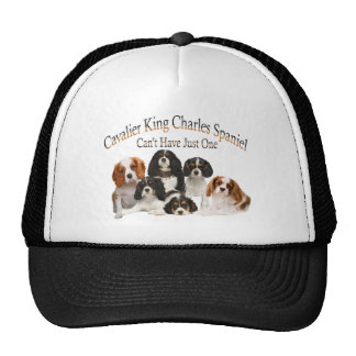 Cavalier King Charles Spaniel Can't Have Just One Cap
