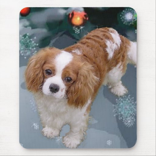 cavalier king charles spaniel holiday art the young cavalier