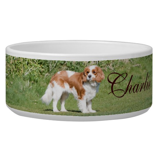 Cavalier King Charles Spaniel custom name pet bowl