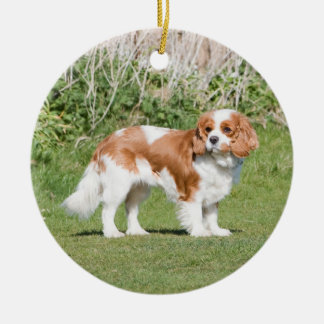 Cavalier King Charles Spaniel dog beautiful photo Round Ceramic Decoration