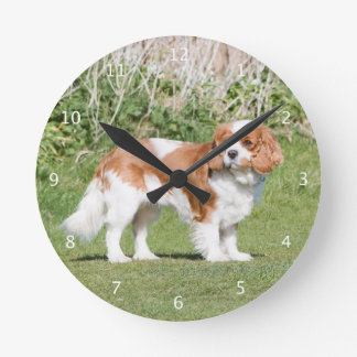 Cavalier King Charles Spaniel dog beautiful photo Round Clock