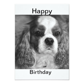 Cavalier King Charles Spaniel Happy Birthday Card 13 Cm X 18 Cm Invitation Card