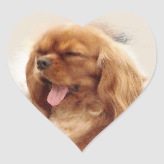Cavalier King Charles Spaniel Heart Sticker