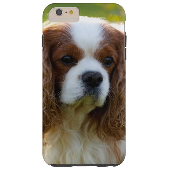 Cavalier King Charles Spaniel iPhone 6 Plus Case