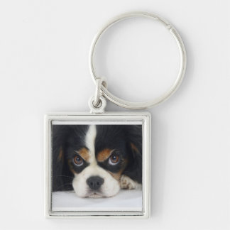 Cavalier King Charles Spaniel Keychain Tri-Colored