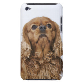 Cavalier King Charles Spaniel looking up Barely There iPod Cases