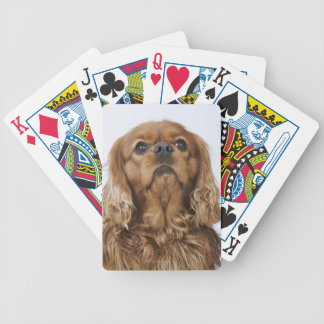 Cavalier King Charles Spaniel looking up Bicycle Playing Cards