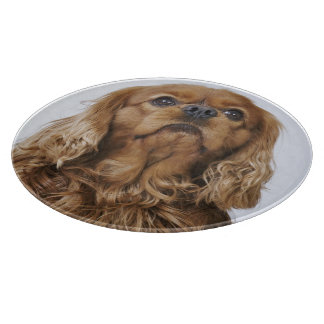 Cavalier King Charles Spaniel looking up Cutting Board