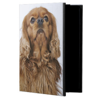 Cavalier King Charles Spaniel looking up iPad Air Cover