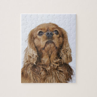 Cavalier King Charles Spaniel looking up Jigsaw Puzzle